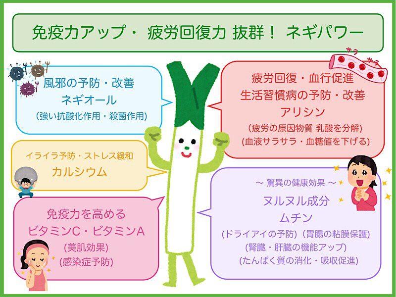 「ネギ 栄養素」の画像検索結果